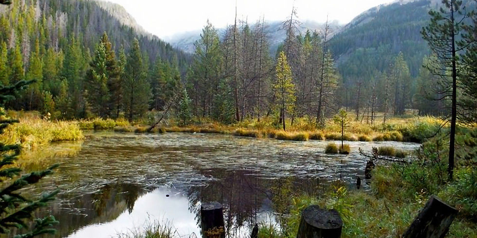 Wellness in the Wilderness- Authentic Acceptance