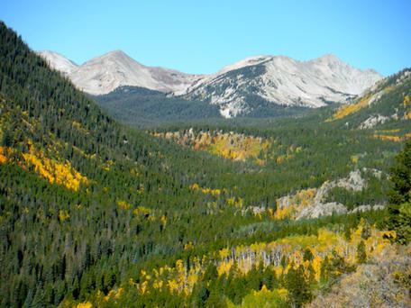 Golden Fall Foliage on the Colorado Trail near Buena Vista CO 9.21.17