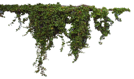 Plants-Free-PNG-Image.png