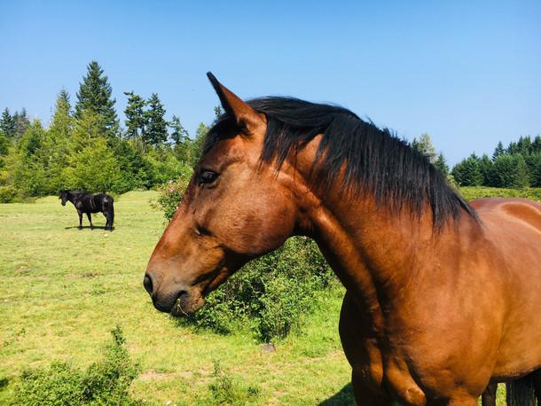 Horses and Wildlife