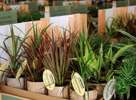 Plant Shoppe Rocket Farms Tags