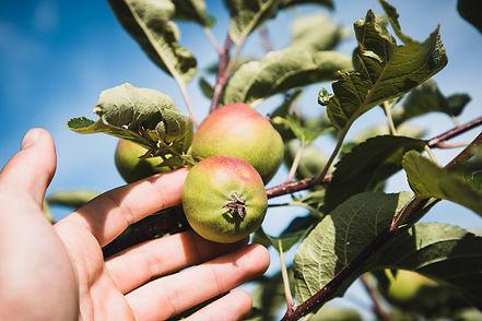 Fruit Olatu