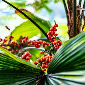 USING PLANT-BASED PESTICIDES