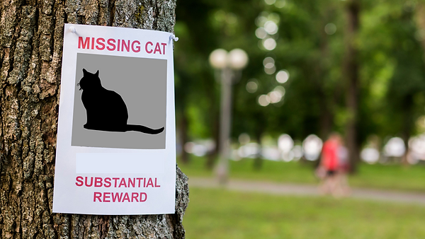 missing cat poster adapted.png