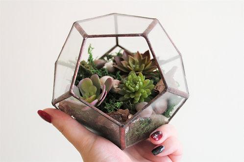 флорариум с искусственными суккулентами, террариум, мини сад, имитация растений, фитодизайн, сад в стекле, додекаэдр
