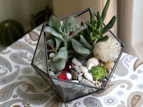 флорариум, флорариум купить, флорариум тиффани, флорариум денежное дерево, террариум, цветы в аквариуме, мини сад, суккуленты