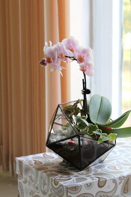 флорариум с орхидеей, флорариум, орхидарикм