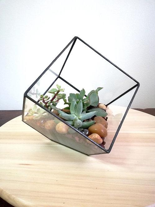 флорариум, флорариум купить спб, геометрические флорариумы, флорариум куб