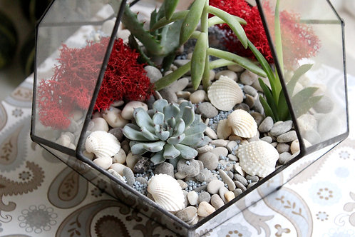 флорариум, terrarium, succulents, glass terrarium, green garden, glass flowers, магазин флорариумов