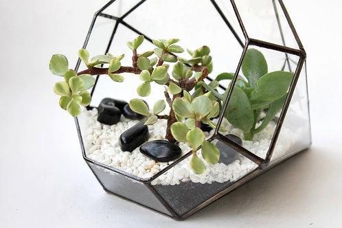 флорариум белые камни фото цена купить, флорариум черные камни фото цена купить, флорариум горизонтальный