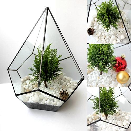 Флорариум Капля с хвойным растением. 32*26 см.