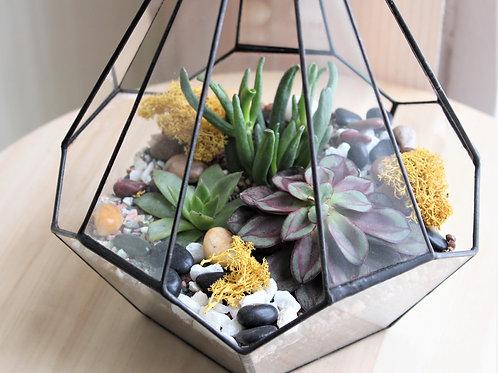 флорариум, флорариум с эхеверией, геометрический флорариум, террариум, мини сад, флорариум спб суккуленты, сад в стекле