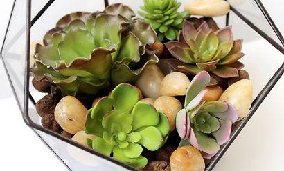 флорариумы с искусственными суккулентами