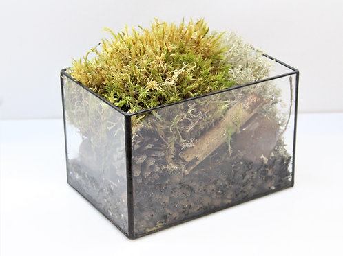 флорариум купить, моссариум, террариум, флорариум с домиком, флорариум мох, мини садик с мхом, живой мох, настоящий мох
