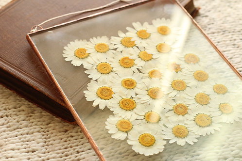 гербарий, гербарий купить, гербарий фото, гербарий в рамке, гербарий в стекле, гербарий под стеклом, гербарий из цветов