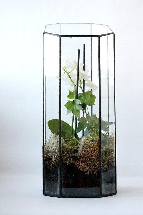 Флорариум Башня с орхидеей. Орхидариум, 40*18*15 см.