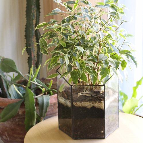 флорариум с бонсаем, флорариум с фикусом, подарок флорариум, большой террариум флорариум, флорариум купить спб, мини сад,