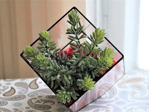 флорариум куб, флорариум искусственные растения, real touch succulents terrarium, копии суккулентов, флорариум купить спб
