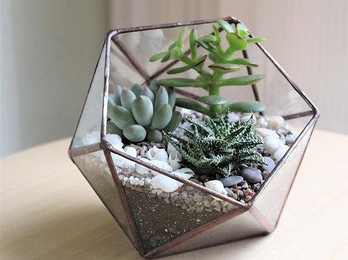 terrarium, florarium, succulents terrarium, mini garden, green garden, флорариум купить спб, флорариум с суккулентами