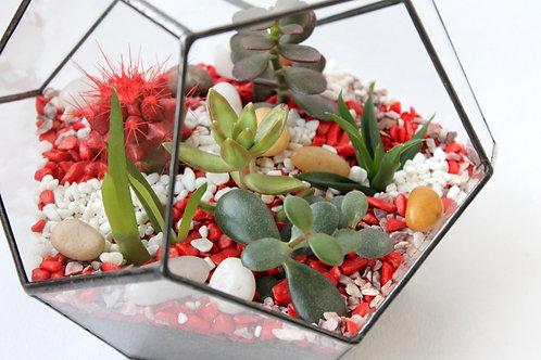 флорариум с кактусами, флорариум суккуленты, геометрический флорариум, флорариум в интерьере