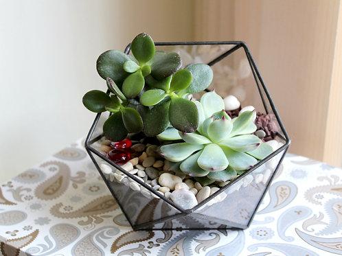 флорариум, флорариум с суккулентами, glass flowers, succulents, terrarium, florarium, террариум, мини сад, цветы в стекле,