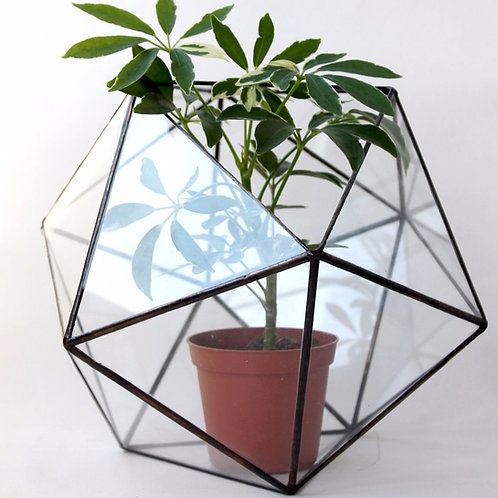 Флорариум икосаэдр, флорариум купить, террариум из стекла для растений, флорариумы оптом