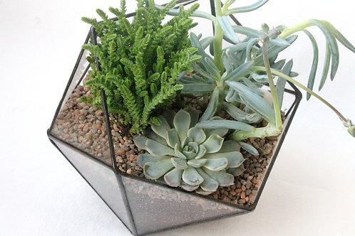 флорариум с кактусами, флорариум суккуленты, флорариум с эхеверией, флорариум с каменной розой