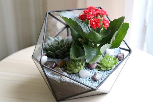 флорариум, флорариум эхеверия, флорариумы, террариум, мини сад, glass flowers, succulents, glass terrarium, terrarium