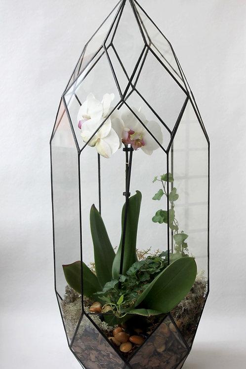 флорариум плющ и мох, флорариум фаленопсис, орхидариум