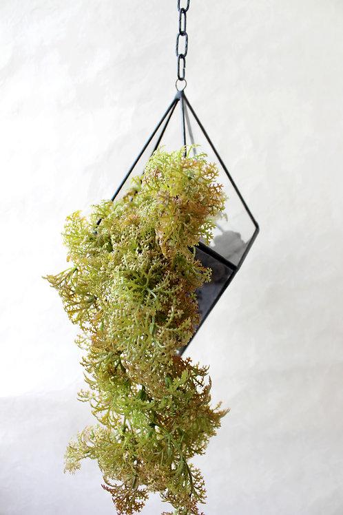 флорариум, подвесной флорариум, флорариум на цепи, флорариум купить