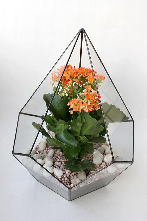 геометрический флорариум, флорариум с цветком, флорариум с растением, тепличка флорариум, флорарриум додекаэдр, флорариум