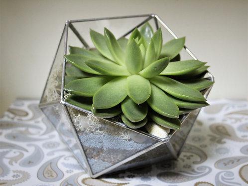 флорариум, террариум, мини сад, флорариумы оптом, флорариумы в наличии, флорариумы купить спб