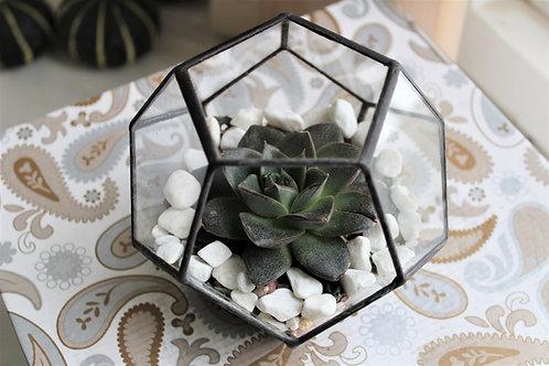 флорариум с суккулентами, флорариум с эхеверией, флорариум купить, геометрический флорариум, флорариум додекаэдр, террариум