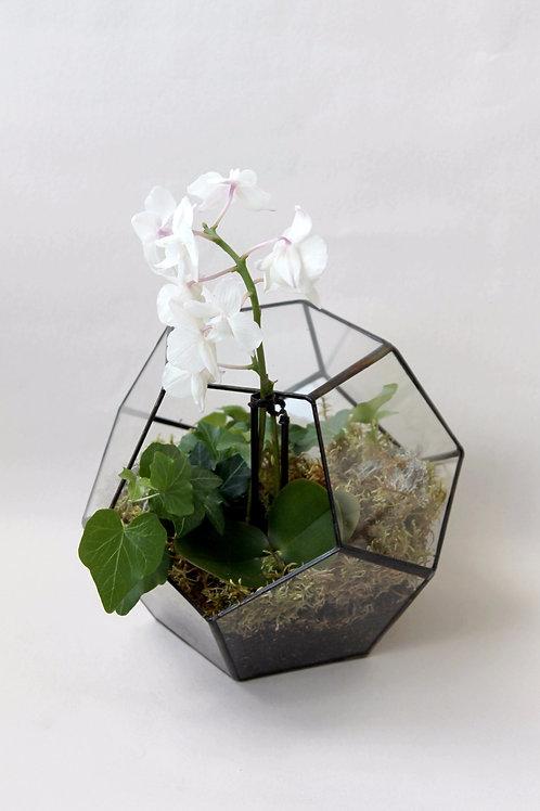 флорариум с орхидеей, тепличка с орхидеями, флорариум додекаэдр, флорариум с белой орхидеей