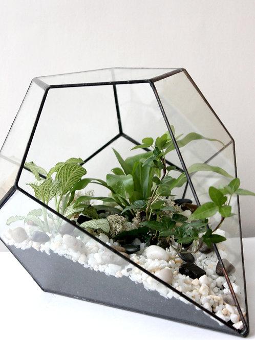 Флорариум Капля горизонтальный. Зеленая фиттония, папоротник и хедера, 32*26 см.