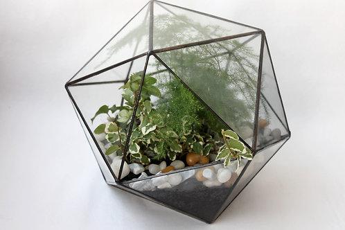 флорариум спб, флорариум glassflowers, флорариум с фикусом, минисад
