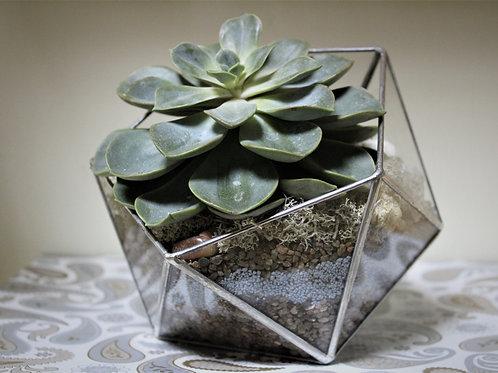 флорариум с сукклентами икосаэдр, флорариум террариум мини садик купить спб, суккуленты в вазе