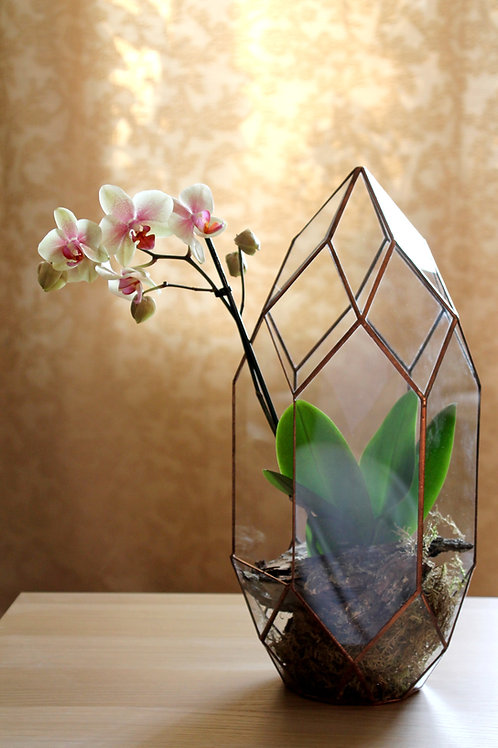 флорариум, флорариум с орхидеей, корпоративные подарки