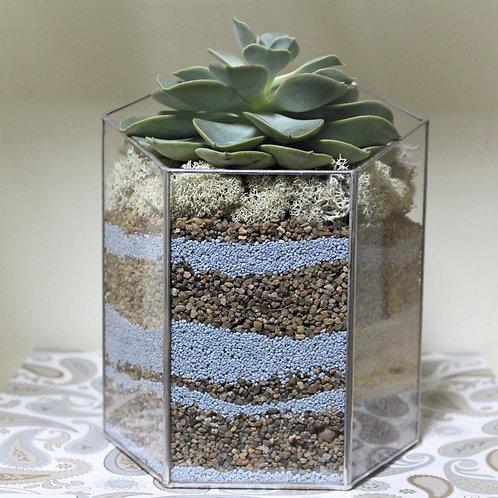 флорариум, флорариум купить, геометрический флорариум с суккулентами, эхеверия флорариум, террариум