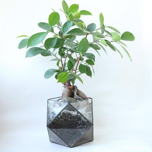 флорариум с бонсаем, флорариум с фикусом, подарок флорариум, большой террариум флорариум, флорариум купить спб, бонсай купить
