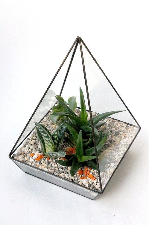 флорариум пирамида с суккулентами, корпоративный подарок, подарок руководителю