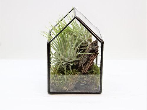 флорариум , флорариум с тилландсией, флорариум купить спб, terrarium, succulents, florarium