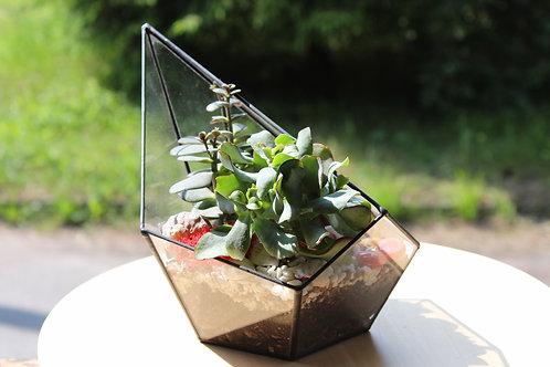необычный флорариум, флорариум купить спб, питер флорариумы, флорариум эхеверия, terrarium, succulents