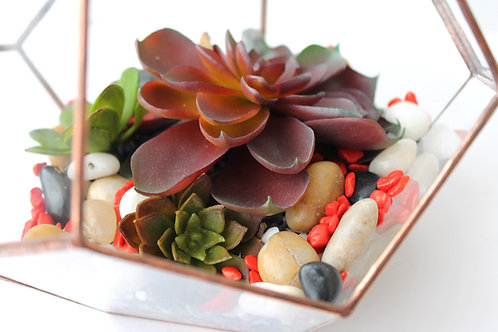 florarium, terrarium, glassterrarium, succulent terrarium, geometric terrarium, glass flowers