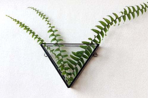 мини-флорариум