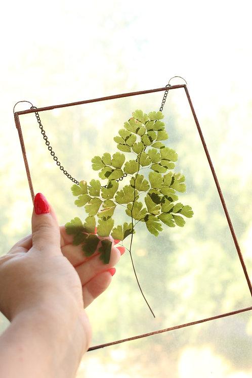 гербарий, гербарий купить, цветы гербарий, гербарий купить спб, папоротник гербарий, цветы в рамке, цветы в стекле