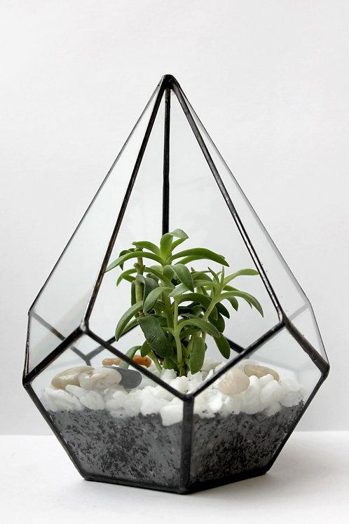 Флорариум Капля малая с кактусом и белым декором, высота 22 см