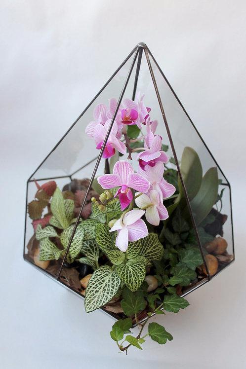 флорариум с орхидеей, орхидариум, флорариум спб купить