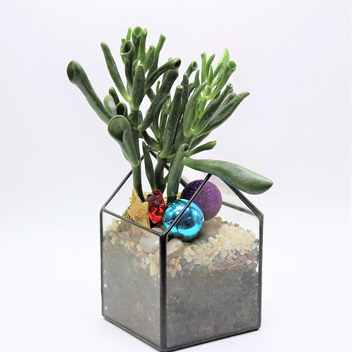 новогодний флорариум, купить флорариум, новогодние подарки
