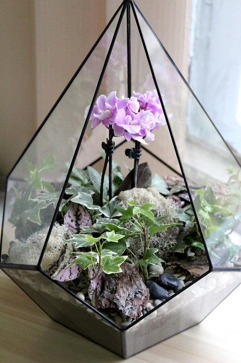 флорариум с орхидеей, геометрический орхидариум, флорариум спб, флорариум купить, фиттонии, хедера, орхидея, флорариумы оптом
